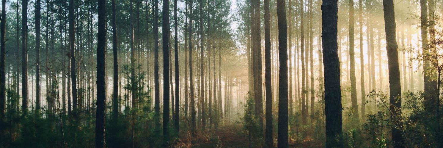 Gastech Energi støtter indsamlingen Danmark Planter Træer